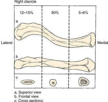 סיווג של שברי עצם הבריח לפי מיקומם לאורך העצם. רוב השברים הם באמצע העצם.